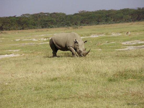 Smile to Africa Adventure :                   Nakuru Lake