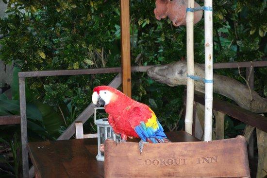 Lookout Inn Lodge:                   Ontbijt