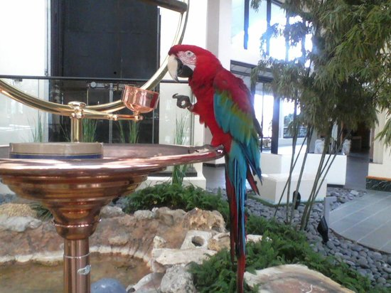 Hyatt Regency Grand Cypress:                                     Merlot, who lives in the lobby of the hotel.