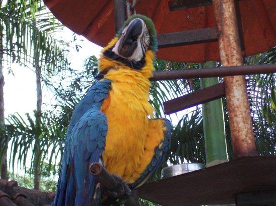 Xica da Silva Pousada :                   animais soltos nos jardins