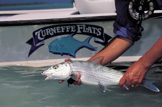 Turneffe Flats : A Lovely Bonefish