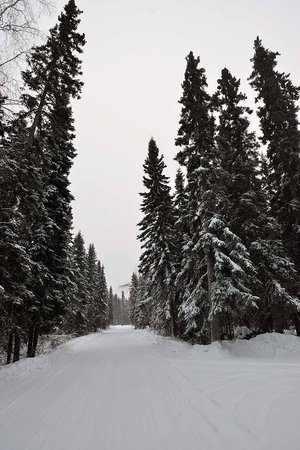 This is the road leading to North Pole Cabins