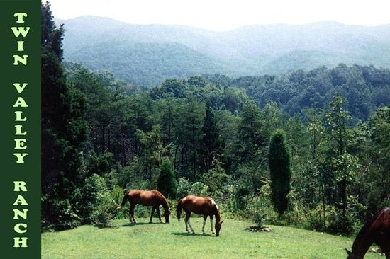 Twin Valley Bed and Breakfast and Horse Ranch: Enjoy the horses in their natural state from the lodge porch