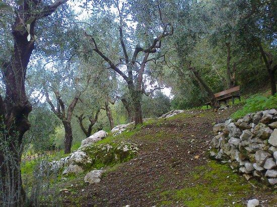 B&B Villa Castelcicala:                   passeggiata nell'oliveto nel giardino della struttura