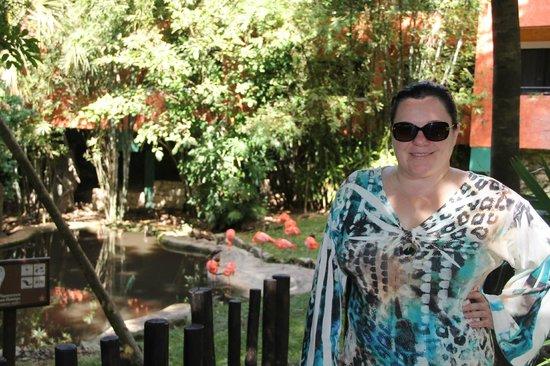 Iberostar Quetzal Playacar:                   flamingos