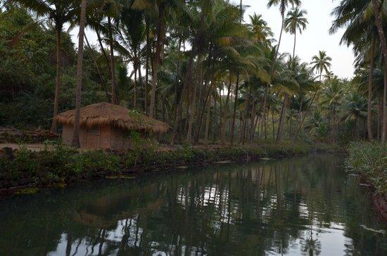 Dwarka Eco Beach Resort:                   like in the jungle