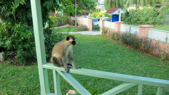 Halcyon Palm:                   Morning guest on our railing