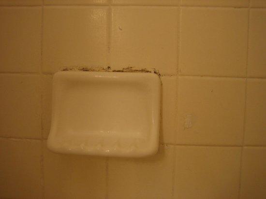 Cavalier South Beach:                   Grubby soap tray