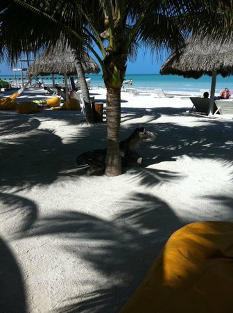 Holbox Hotel Casa las Tortugas - Petit Beach Hotel & Spa:                                     The beach