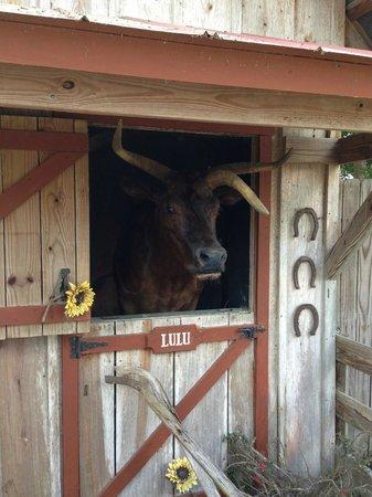 "Babcock Ranch Preserve: ""Ripley's believe it or not "" subject Lulu!"