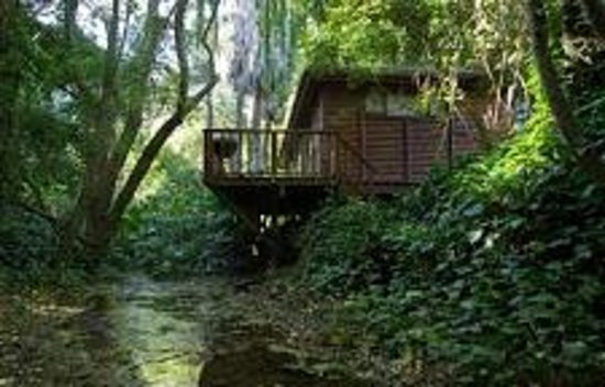 Riverside Estates: Tree House from Ravine