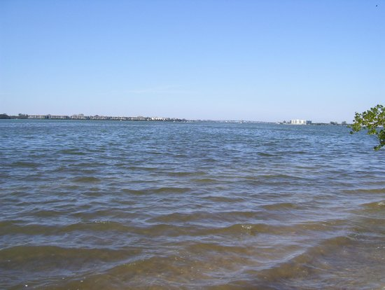 Cedar Point Environmental Park:                   Lemon Bay from the end of the trail