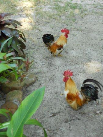 Mairood Resort :                                     Cocks
