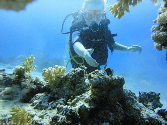 Aqua Nabq Dive Center:                   9