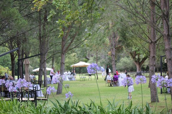Franschhoek, South Africa:                   Parco zona pic nic