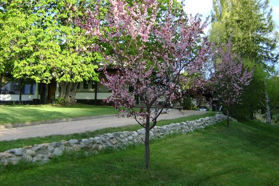 Glenoka Farm Bed and Breakfast: Spring plum blossoms