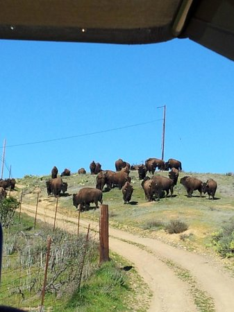Cape Canyon Expedition :                   Maybe You Will See Bison!