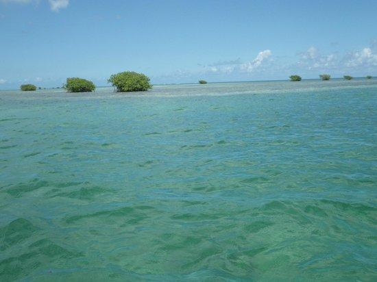 Couleur de l 39 eau sans trucage picture of bleu blanc for Couleur bleu vert