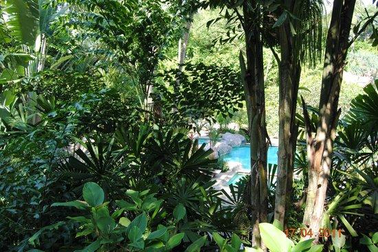Marina Phuket Resort:                   Der Pool liegt ruhig und versteckt zwischen all der Pflanzenpracht.
