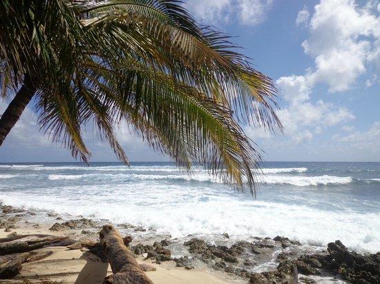 Caro pero no el mejor hotel picture of sol caribe sea for Sol caribe sea flower san andres