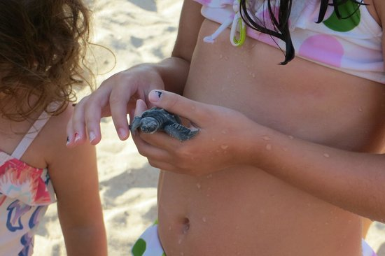 Vallarta Torre : Getting the turtles ready