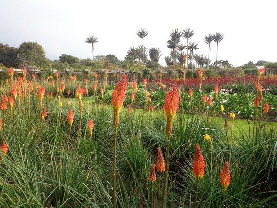 Jardín Botánico de Bogotá Jose Celestino Mutis: Explosion natural en plena ciudad, merece visitarlo