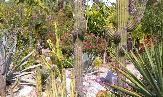 Posada La Poza:                   Extensive landscaped gardens
