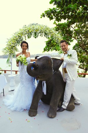 Villa Elisabeth: elefanten bringen dem brautpaar glueck