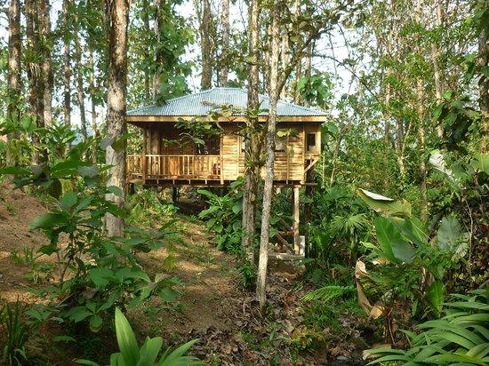 Cabañas Rústicas La Fortuna:                   Casa del árbol