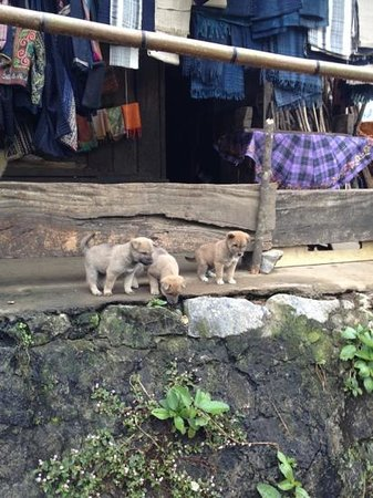 Sapa Garden Bed and Breakfast: village pups