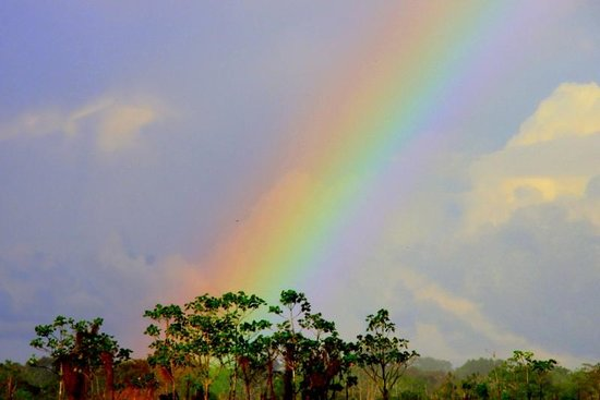 Cumaceba Lodge:                                     Rainbow over the Amazon rainforest at Cumaceba