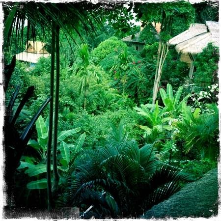Le Bout du Monde:                   secret garden as seen from the beautiful open wooden restaurant