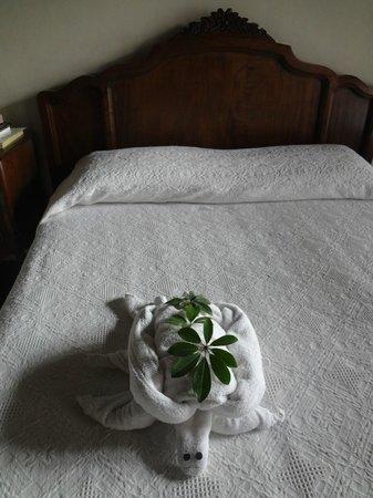 Hotel Casa Noble:                   tortuga