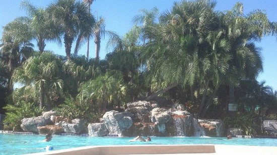 International Palms Resort & Conference Center:                   The pool