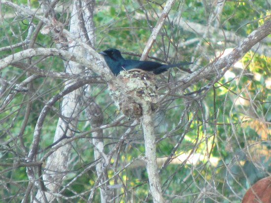 Dan Irby's Mangrove Adventures:                   Birds nest.