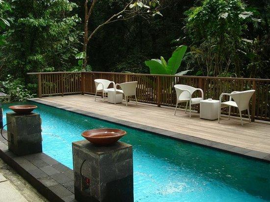 Pool - Alam Ubud Villa Photo