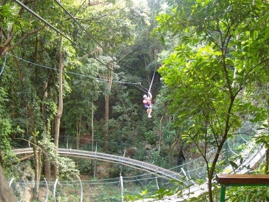 Rainforest Zip Line at Mystic Mountain :                   Zip lining