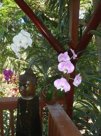 Honu Kai B&B:                   Flowers