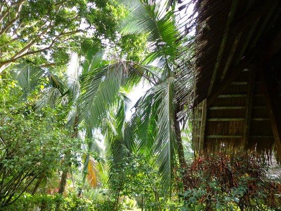 Alby Lodge:                   Garten