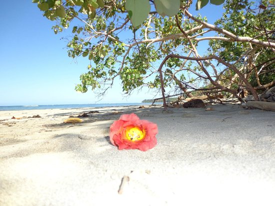 Alby Lodge:                   Strand in Cahuita