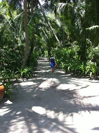Kuramathi Island Resort:                   the 'main road'!