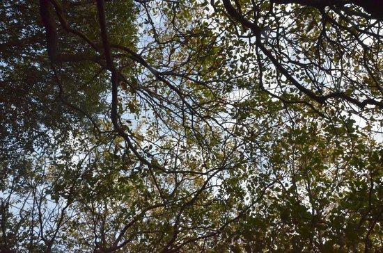 Eretz Ha Galil:                   The Canopy over the Hammock