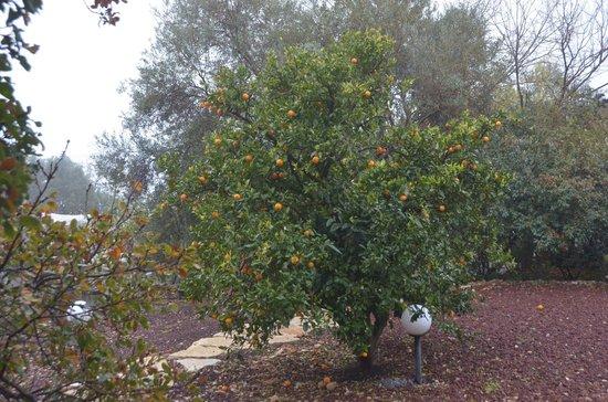 Eretz Ha Galil:                   Trees