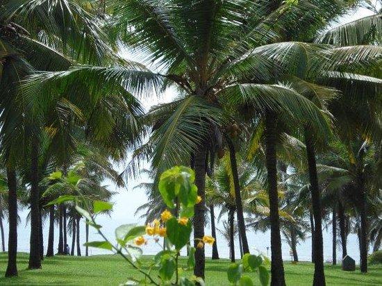 Taj Exotica Goa:                   le jardin , vue mer