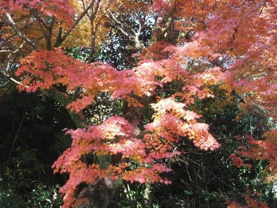 Tatsuta Natural Park :                   立田自然公園の写真その2
