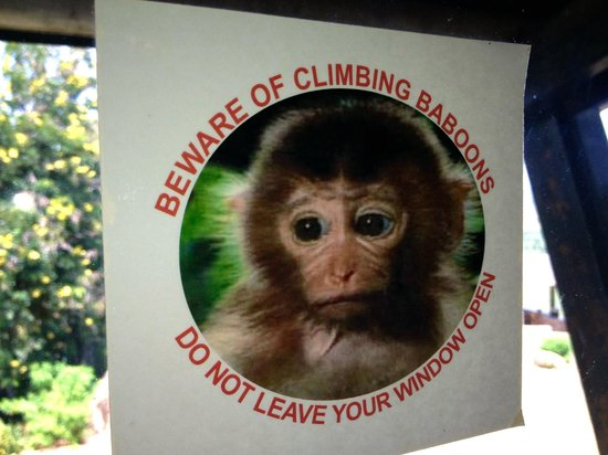 Voi Safari Lodge: You've been warned!