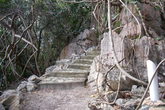 Paya Bay Resort:                   Stairs on one of the trails.