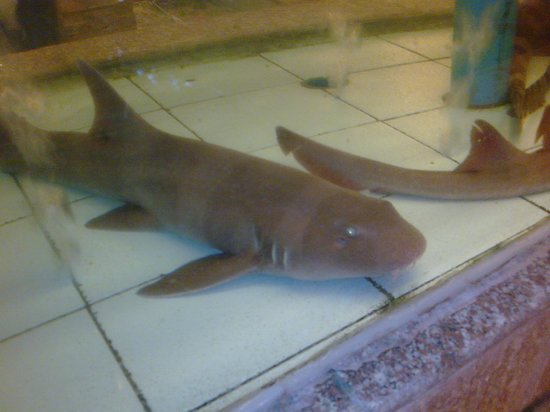Golden Bay Fresh Seafood Restaurant:                   . . . but this baby shark I cannot afford to eat.