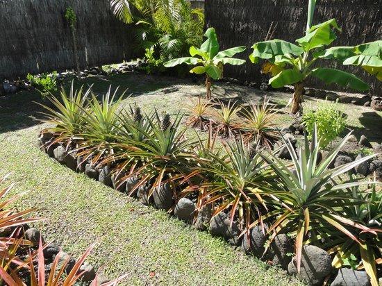 Makayla Palms:                   Garden