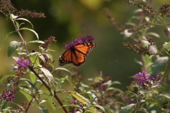 Butterfly Picture Of Norfolk Botanical Garden Norfolk Tripadvisor